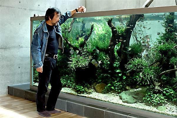 Captivating Takashi Amano