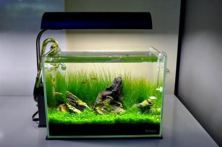 Also, Donu0027t Think That It Must Be A Minimalist Setup. Today, Many Aquarists  Believe That They Have To Setup A Minimalist, Zen Like Setup In Order To Be  ...