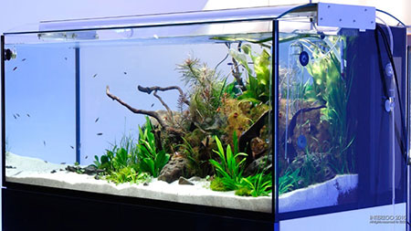 Donu0027t Beat Your Aquascape With The Ugly Stick!   ScapeFu
