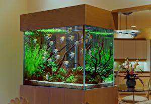 Aquarium Design Group design