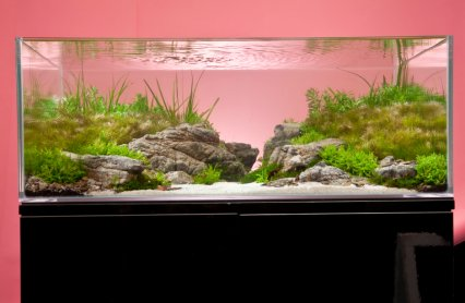 Delightful Aquascape By Dennerle For PFK