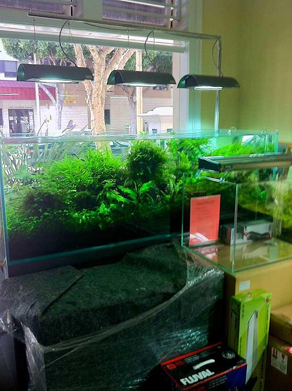 Window planted aquarium