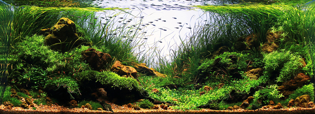 Brazil's Ascension to the Aquascaping World Stage - ScapeFu
