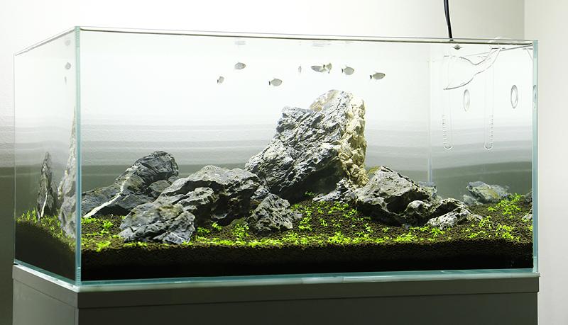 George Farmer Aquascape