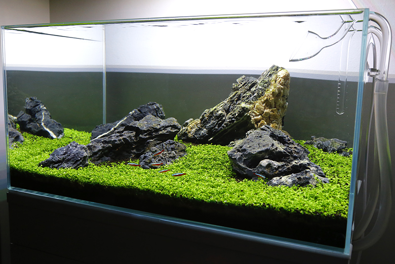 Hereu0027s A Great HD Video Of The Aquascape In Progress: