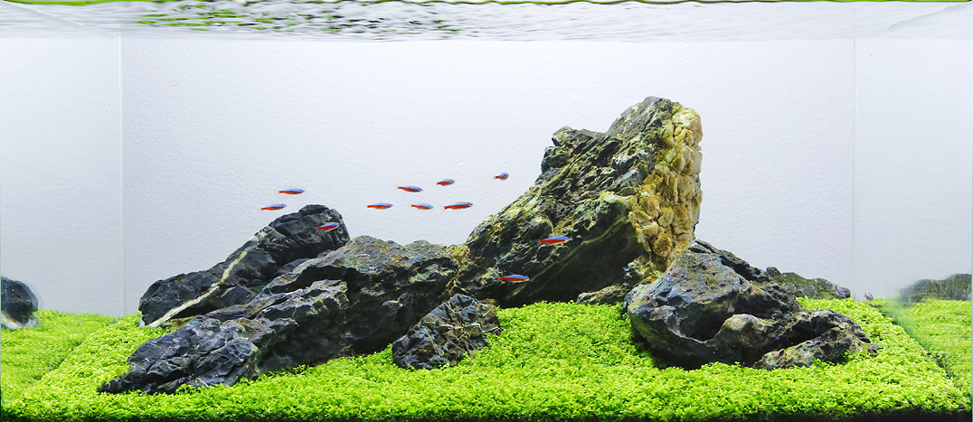 Aquascape Analysis of George Farmer's One-Pot Iwagumi