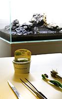 Tropica 1-2-Grow Pot