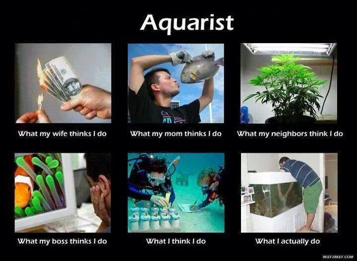 being an aquarist