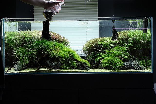 Planted aquarium fertilizer – ScapeFu Podcast episode 12
