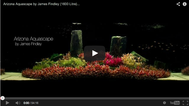 Aquascaping Masters: Arizona by James Findley