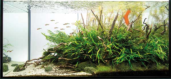 aquascaping - pawel - focal point
