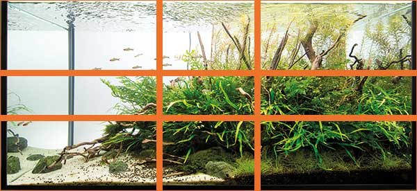 aquascaping - pawel - golden sections