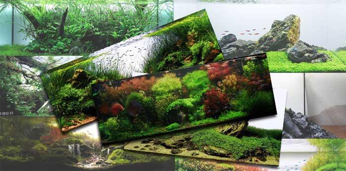 ScapeFu018: Aquascaping Styles