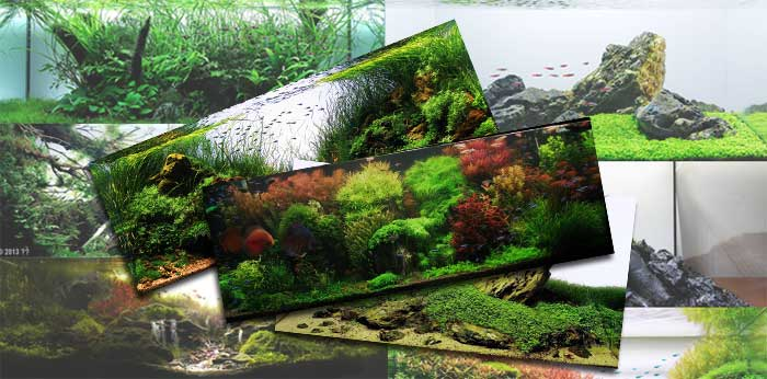 Aquascaping styles for beautiful aquariums [a series]