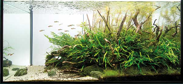 Aquascaping   Pawel   No Branch Left
