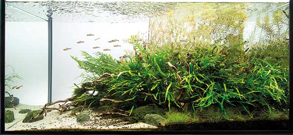 aquascaping - pawel - no trees