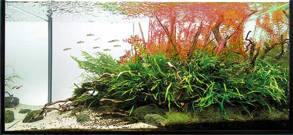 aquascaping - pawel - red back