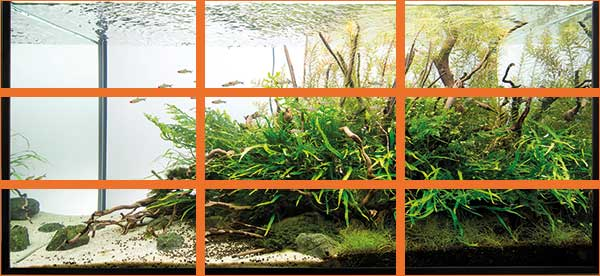 aquascaping - pawel - rule of thirds