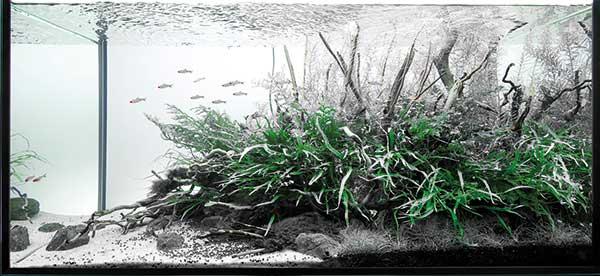 aquascaping - pawel - texture