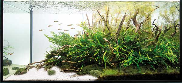 aquascaping - pawel - white sand