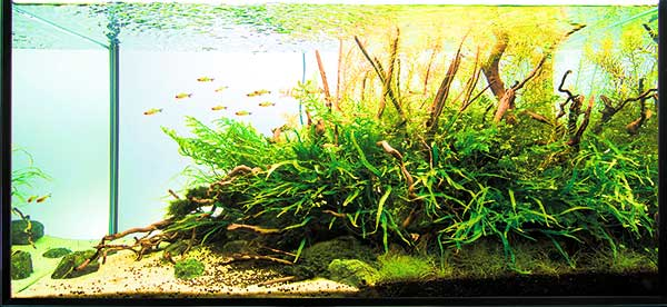Aquascaping Analysis Project Ryuboku Scapefu