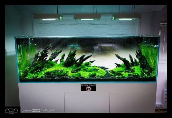 Full aquarium