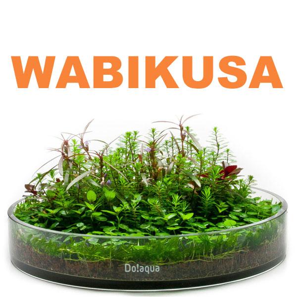 SF026 Wabikusa