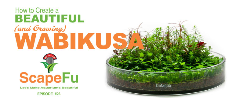 SF026: How to Create a Beautiful (and growing) Wabikusa