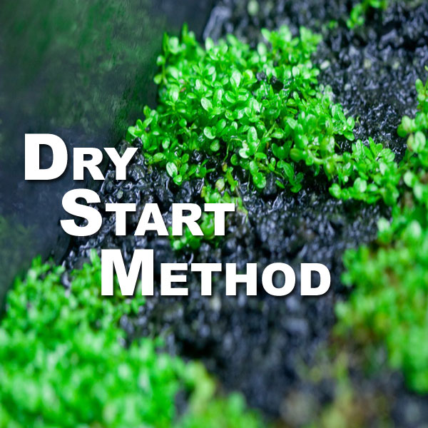 Dry Start Method: 7 Tips for Success – SF 027
