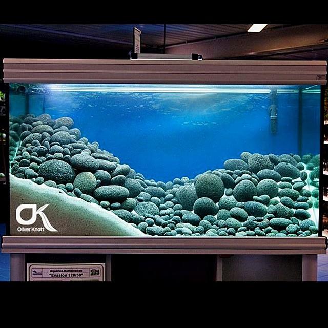 Low Tech Aquascape   Oliver Knott