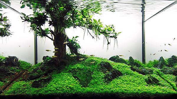 aquarium photography tree aquascape