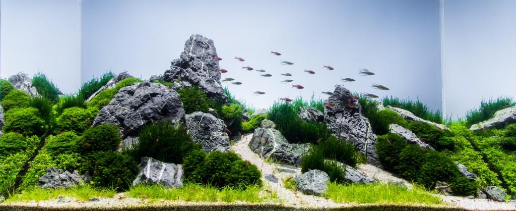 Aquascape by Jeff Miotke