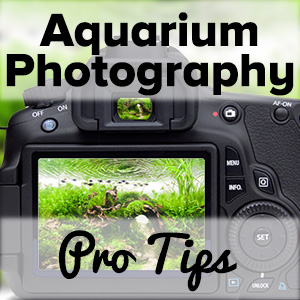 Aquarium Photography: Tutorial For Aquascaping | ScapeFu030