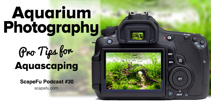 Aquarium Photography
