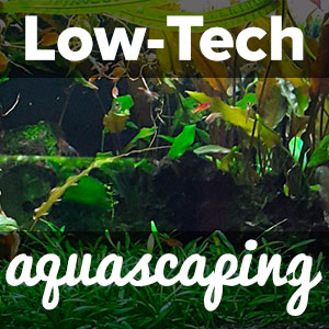 Low Tech Aquascaping: What you need to know