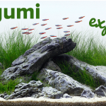Iwagumi Aquascaping Style Explained | ScapeFu037