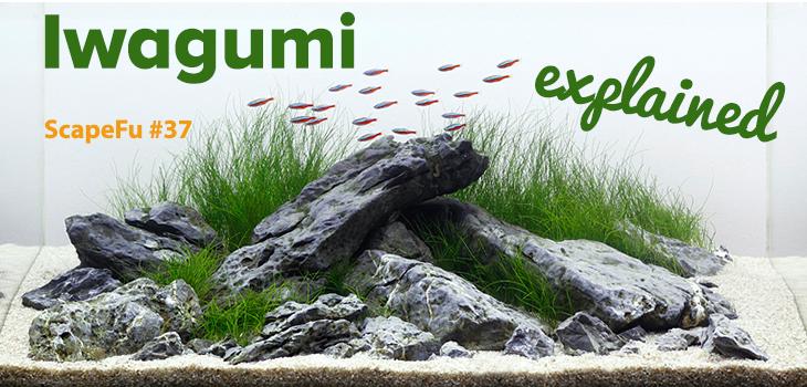 Iwagumi Aquascaping Style Explained | ScapeFu037   ScapeFu