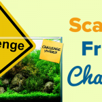 Use of Contrast in Aquascaping – ScapeFu Friday Challenge