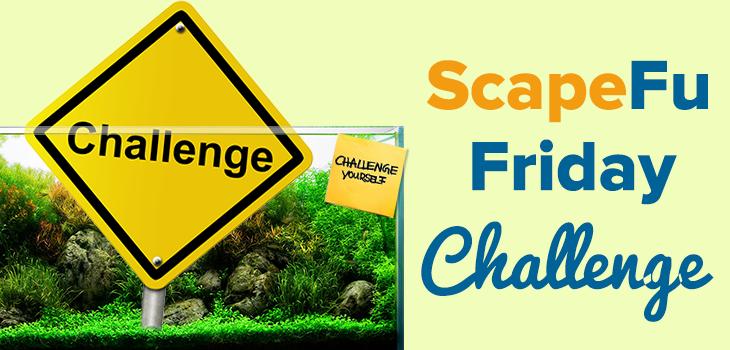 ScapeFu Friday Challenge