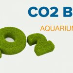 CO2 Basics – Aquarium Plants Tutorial