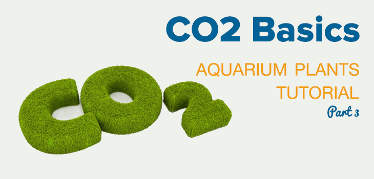 CO2 Basics Aquarium Plants Tutorial