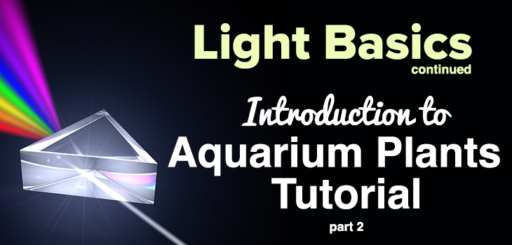 Light Basics Continued Introduction to Aquarium Plants Tutorial