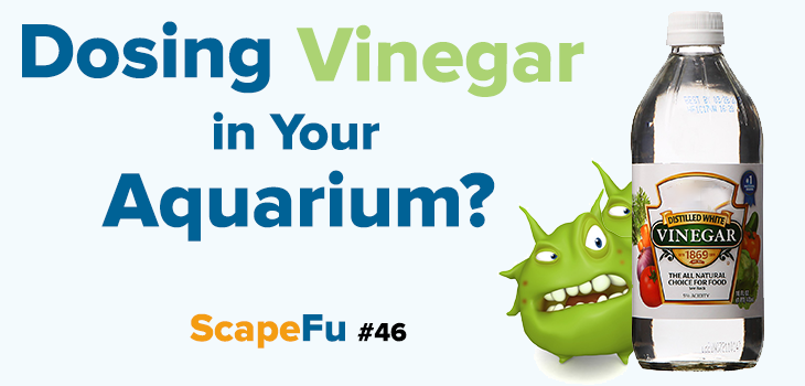 Dosing vinegar in your aquarium