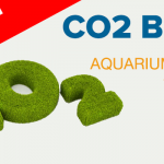 How to Add CO2 – Introduction to Aquarium Plants Tutorial