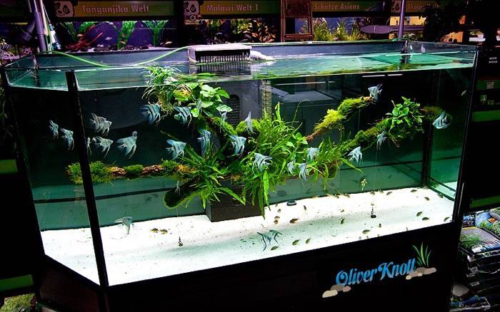 Knott aquascaping style