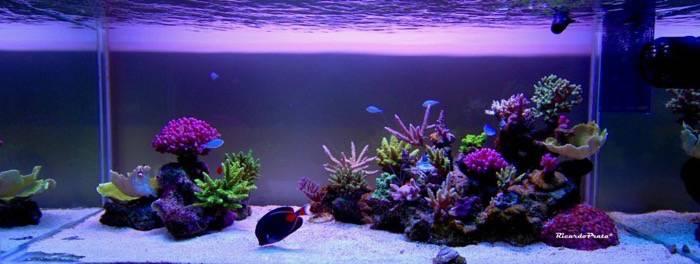 Reef island style