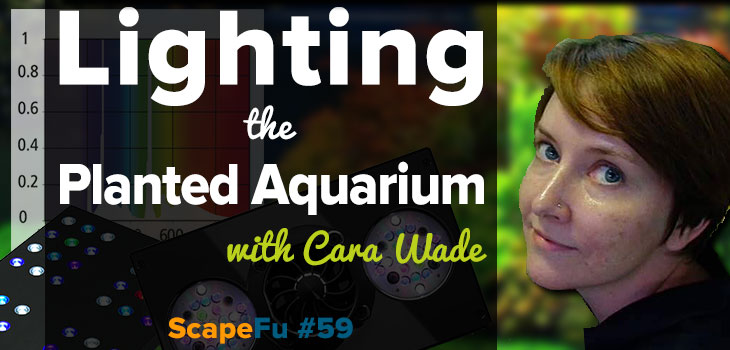 Lighting the Planted Aquarium with Cara Wade